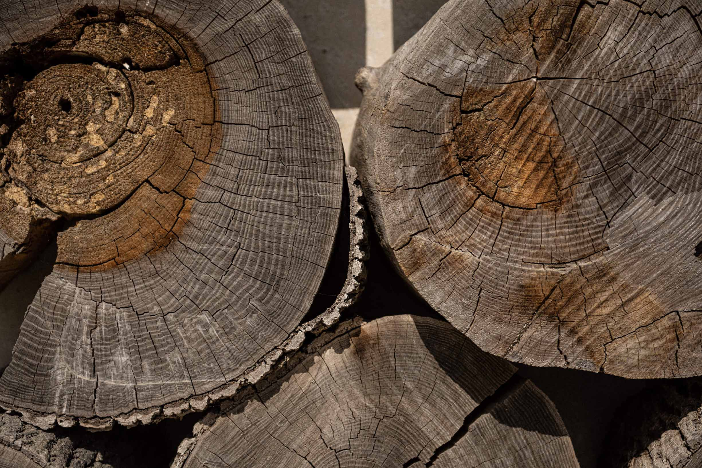 close up of stacked tree trunks