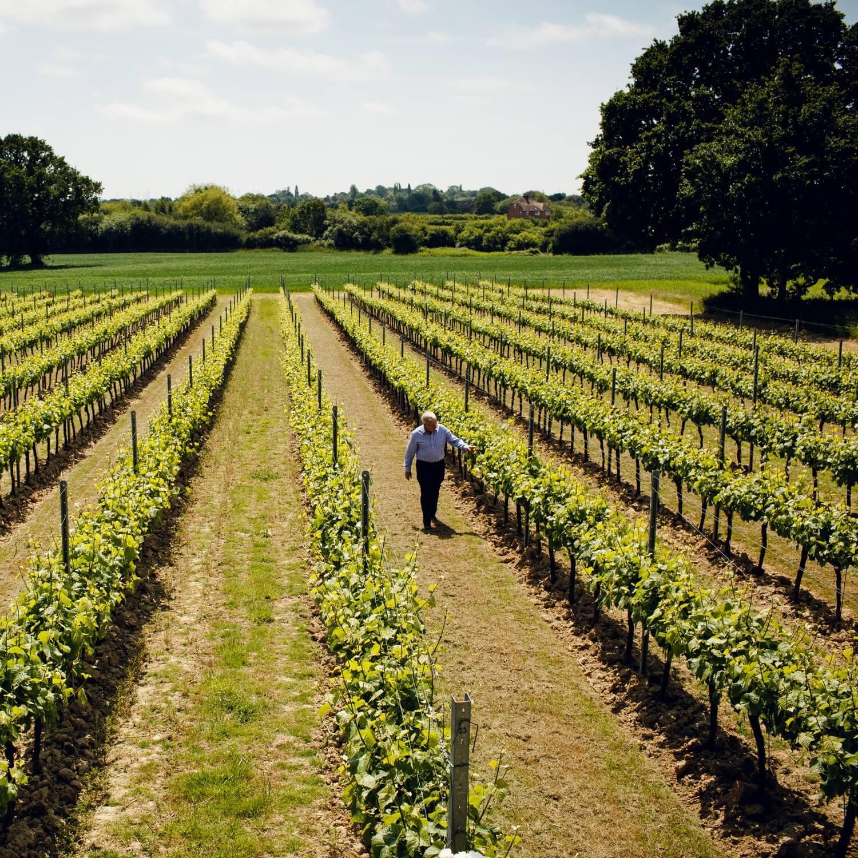 Among the vines walking