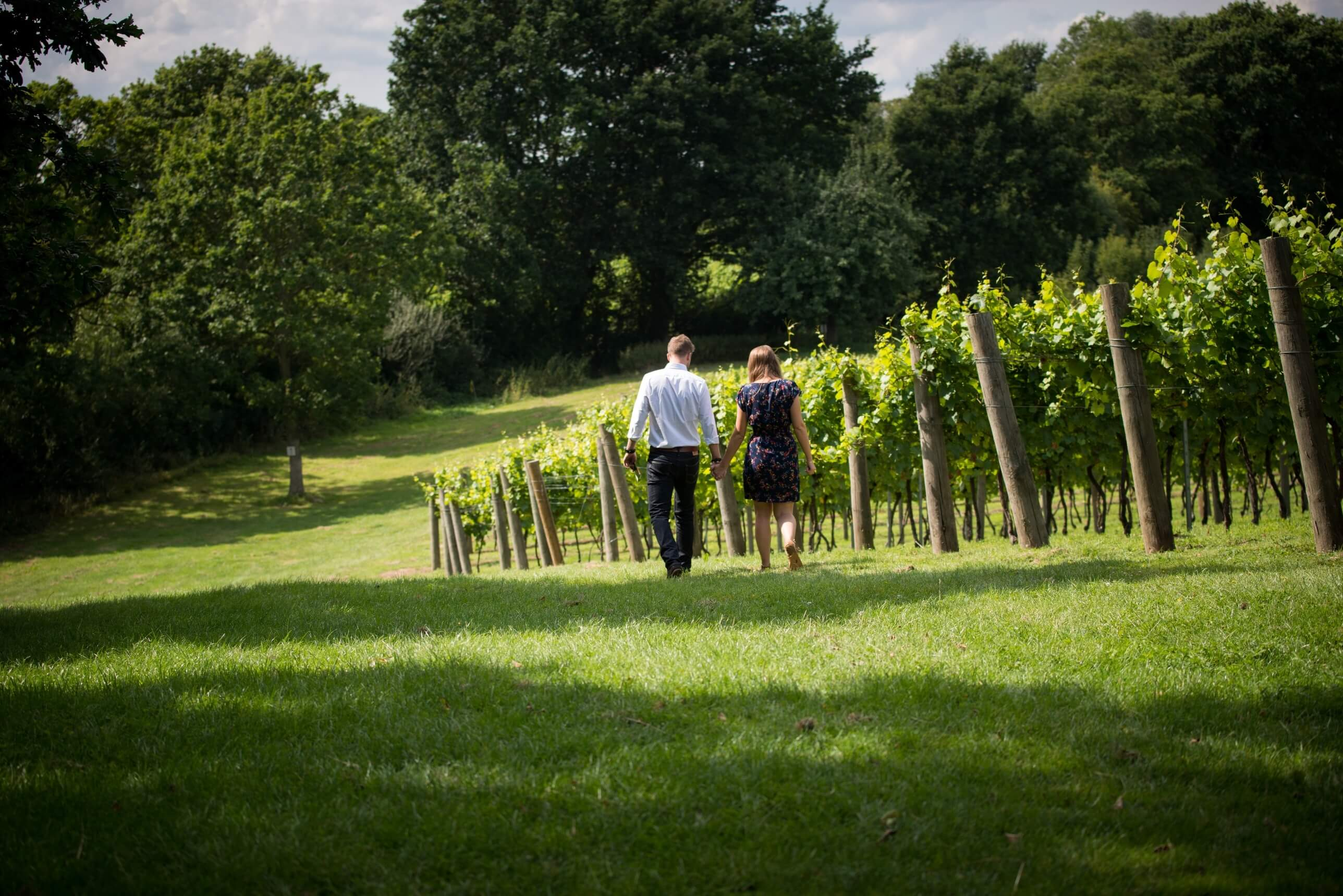 Walking hand in hand through a vineyard